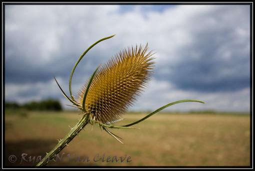 IMAGE: http://www.vancleave.de/images/IMG_2876.jpg